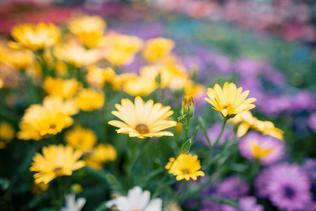 Desiate narodeniny Májového kvetu oslávime so zaujímavými novinkami